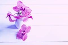 Purpurrote Orchidee in einem Vase auf einer weißen Tabelle Stockbild