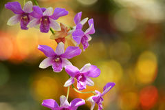 Purpurrote Orchidee im Garten Stockfotografie