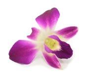 Purpurrote Orchidee lokalisiert Lizenzfreie Stockfotos