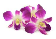 Purpurrote Orchidee lokalisiert Stockfotografie