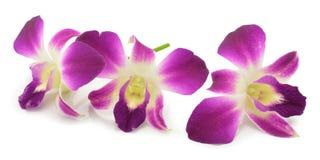 Purpurrote Orchidee lokalisiert Lizenzfreies Stockfoto