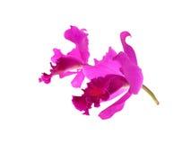 Purpurrote Orchidee lokalisiert auf weißem Hintergrund Stockfotografie