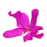 Purpurrote Orchidee lokalisiert auf weißem Hintergrund Lizenzfreie Stockfotografie
