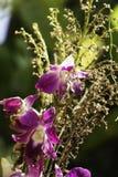 Purpurrote Orchidee mit hellem Sonnenschein stockbilder