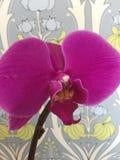 Purpurrote Orchidee mit Paisley Lizenzfreie Stockbilder