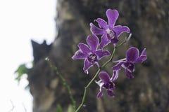 Purpurrote Orchidee nach dem Regen Lizenzfreie Stockfotos