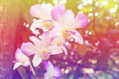 Purpurrote Orchideen blühen Zusammenfassung auf hinterem Grundschönem Lizenzfreies Stockbild