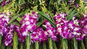 Purpurrote Orchideenblumen an einem thailändischen Markt stockfotos
