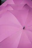 Purpurrote Regenschirme Stockbild