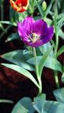 Purpurrote schöne Blume Stockbilder