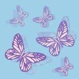 Purpurrote Schmetterlinge auf einem blauen Hintergrund Stockfoto