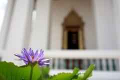 Purpurrote Seeroseblume mit schönem thailändischem traditionellem archite Stockfoto