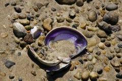 Purpurrote Shell Amidst die Felsen Stockbilder