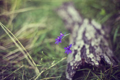 Purpurrote Sommerblumen Lizenzfreie Stockfotografie