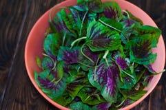 Purpurrote Spinatsblätter in einer Schüssel Neue Mischung des grünen und purpurroten Spinats auf Tabellenabschluß oben Stockbilder