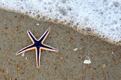 Purpurrote Starfish auf dem Strand Stockfotos