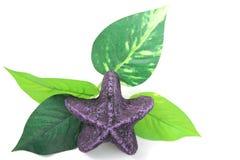 Purpurrote Starfish und Blatt Stockfotografie