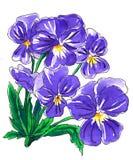Purpurrote Stiefmütterchenblumen für Heiratsdruckprodukte Lizenzfreie Stockbilder