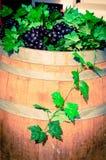 Purpurrote Traube auf Wein Stockfoto