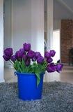 Purpurrote Tulpen Stockfoto