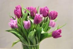 Purpurrote Tulpen Lizenzfreies Stockbild
