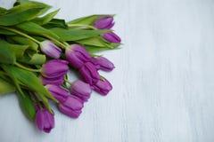 Purpurrote Tulpen auf dem weißen Hintergrund lizenzfreie stockfotografie