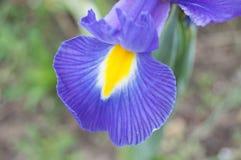 Purpurrote und gelbe Blume stockbild
