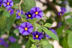 Purpurrote und gelbe Blume lizenzfreie stockfotos