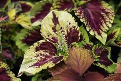 Purpurrote und Grünpflanze lizenzfreie stockbilder