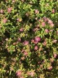 Purpurrote und rosa nette Blumen in der Wiese Lizenzfreie Stockfotos