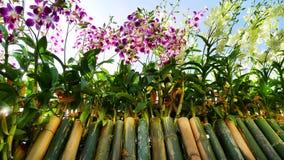 Purpurrote und weiße Orchideen auf Bambus haftet Zaun Viewed von der Unterseite Lizenzfreie Stockfotos