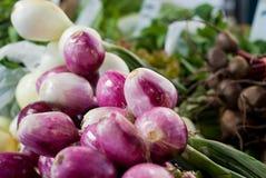 Purpurrote und weiße Zwiebeln Stockbild