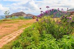 Purpurrote Verbene-Blume in Montag-Stau Lizenzfreie Stockfotografie