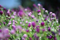 Purpurrote violette blaue Blume im Garten stockbild