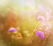 Purpurrote Wiesenblumen Stockfotos