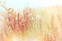 Purpurrote Wiesenblumen Stockfoto