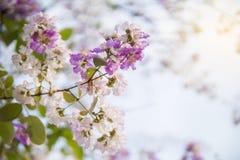 Purpurrote wilde Blume auf Niederlassung gegen blauen Himmel stockfoto