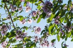 Purpurrote wilde Blume auf Niederlassung gegen blauen Himmel stockbild