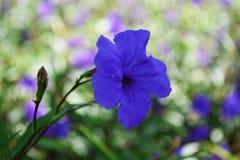 Purpurrote wilde Blume in einer Wiese lizenzfreies stockfoto