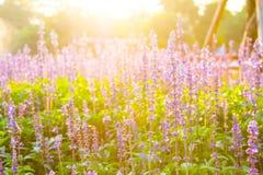Purpurrote wilde Blumen stockfotos