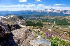 Purpurrote wilde Blumen in den Bergen mit Panoramablick Stockfotografie