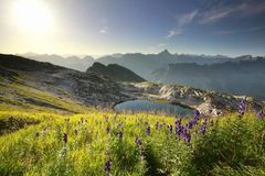 Purpurrote Wildflowers über alpinem See stockfotografie
