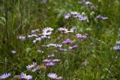 Purpurrote Wildflowers Lizenzfreie Stockfotos
