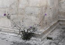 Purpurroter Blütenstand auf dem Hintergrund des Steins stockfoto