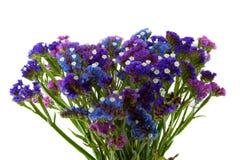 Purpurroter blauer violetter Statice Blumenstrauß Lizenzfreie Stockfotos