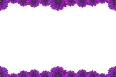 Purpurroter Blumen-Bilderrahmen lokalisiert auf weißem Hintergrund Lizenzfreie Stockfotografie