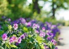 Purpurroter Blumen- und bokehhintergrund Stockfotos