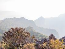Purpurroter Blumenbusch und der Kalkstein auf dem Gebirgshügel Stockfoto
