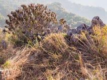 Purpurroter Blumenbusch und der Kalkstein auf dem Gebirgshügel Stockfotografie