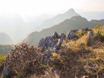 Purpurroter Blumenbusch und der Kalkstein umgeben mit der trockenen Wiese auf der Bergspitze Stockbilder